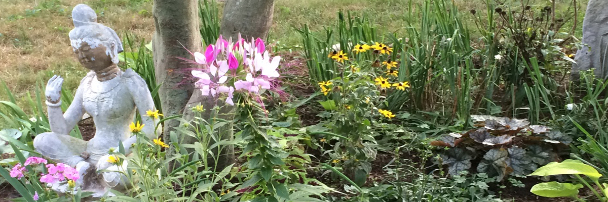 laurie ure Garden